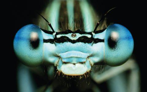 WER mehr sieht, hat mehr vom Leben: Insekten profitieren von ihren Facettenaugen.