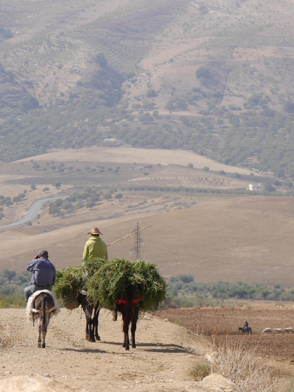 Schnappschuss des Tages: Auf dem Weg von Fez nach Chefchaouen begegneten uns sehr viele Bauern, die sich zumeist auf Eseln fortbewegten.